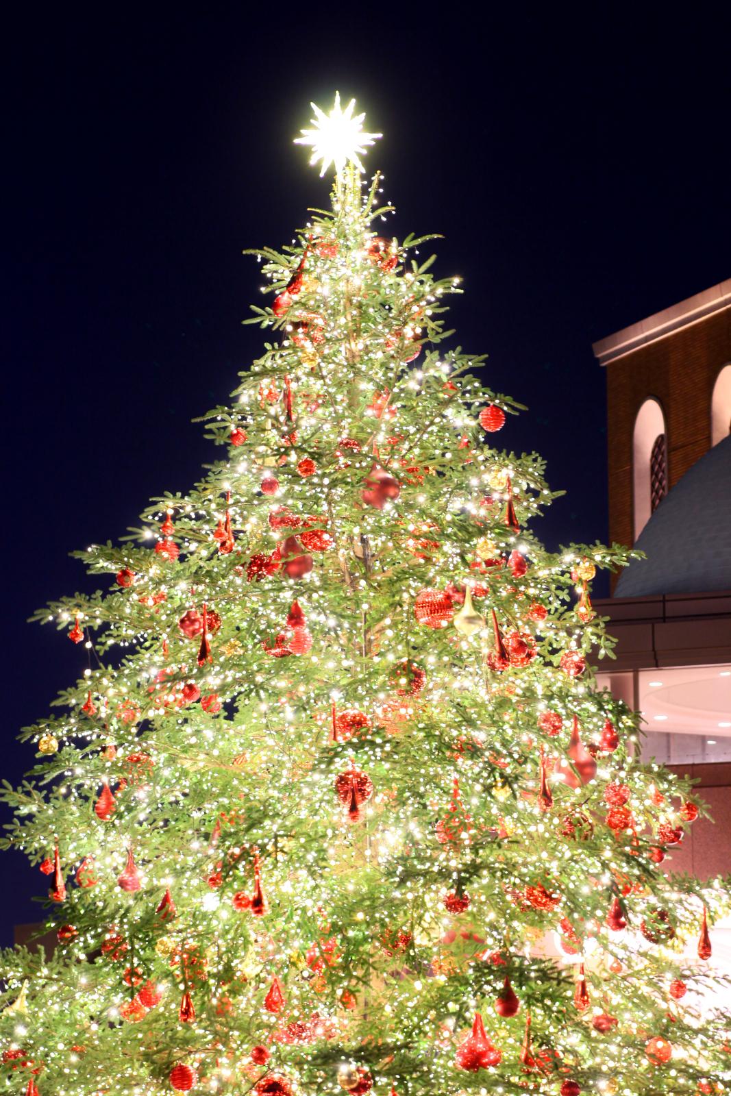 軽井沢クリスマスイルミネーションのおすすめスポットは?アクセス方法や注意点を紹介